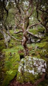 Oak tree forest